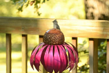 Coneflower Bird Feeder By Desert Steel