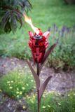 Ginger Garden Torch 409-004 By Desert Steel