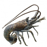 Finely Detailed Brass Night Walker Florida Lobster