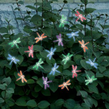 Solar Color Changing Light String - 20pc set - Dragonfly