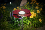 Desert Steel 409-310 Poppy Solar Garden Light - Red