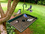 Zenport Z203009 3 in 1 Platform Bird Seed Feeder